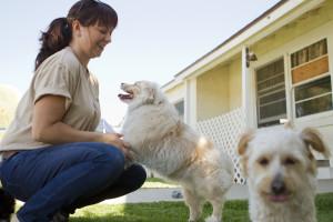 hundpensionat, starta ditt eget hundhotell