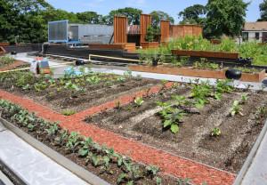 Jobba med trädgårdsanläggningar - många möjligheter Dräneringsarbeten Gräsmattor