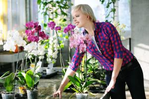 Starta din egen blomsteraffär för blommor vid högtider, jul, nyår,födelsedagen